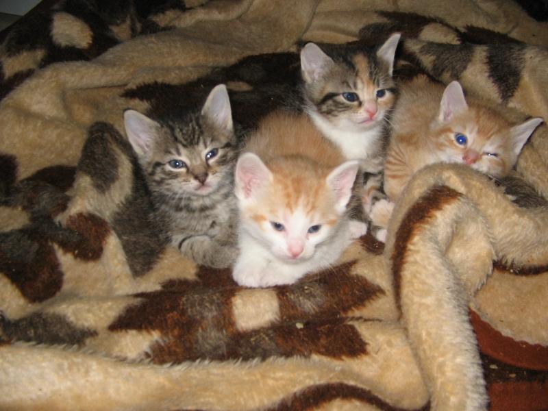 Beby Katzen